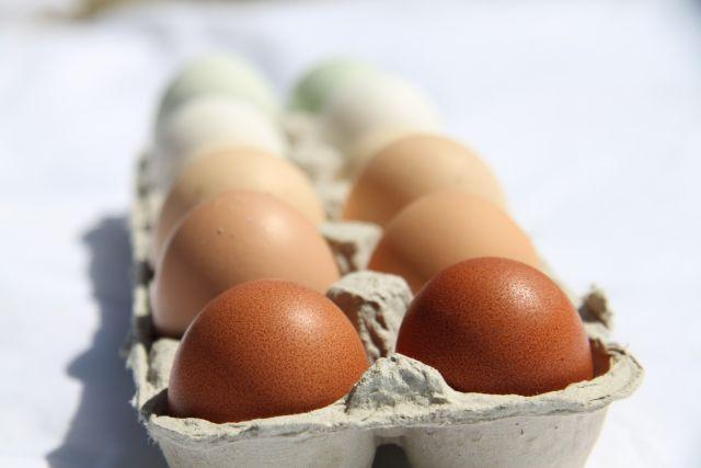 vajcia-640x427